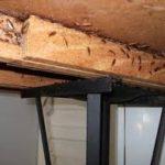 German Cockroach's Under Bench