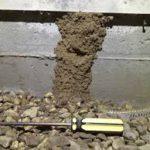 Pest Control Termite control