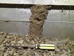 Termite Services